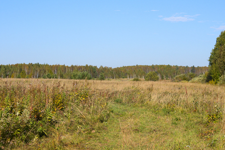 midday field Stok Fotoğraf