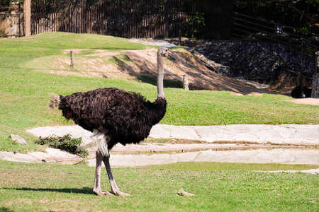 an ostrich: Ostrich portrait Stock Photo