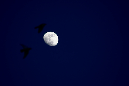 Moon with crows flying