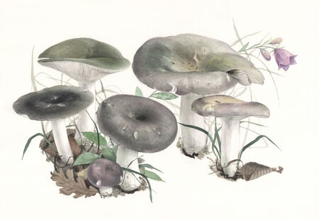 Illustration of a group of wild mushrooms in natural context, on off-white background Imagens
