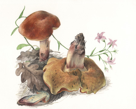 Illustration of a group of wild mushrooms in natural context, against off-white background