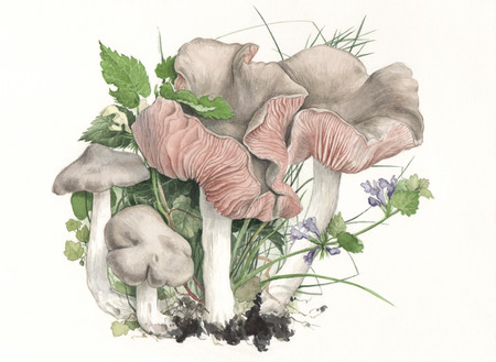 gills: Illustration of a group of wild mushrooms in natural context Stock Photo