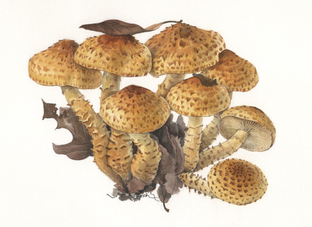 Illustration of a group of wild mushrooms in natural context Stock Illustration - 24545209