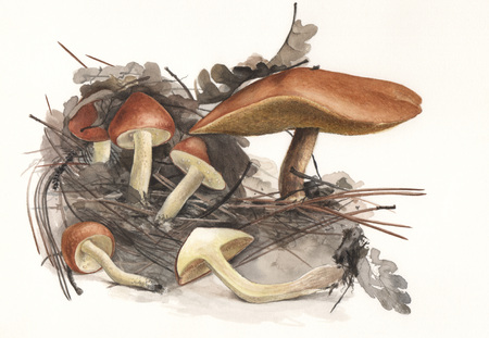 Illustration of a group of wild mushrooms in natural context Banco de Imagens