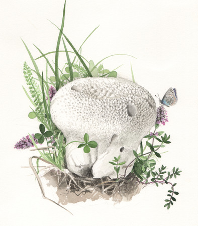 Illustration of a wild mushrooms in natural context