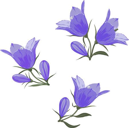 鈴花カンパニュラ - 青いホタルブクロと白い背景の上の芽の手描きベクトル イラスト