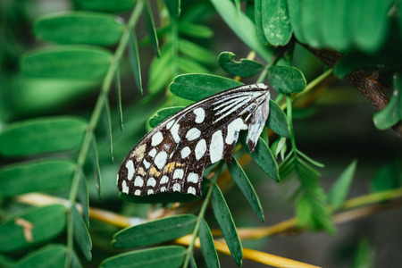 Butterfly wings on the green leaf tree.