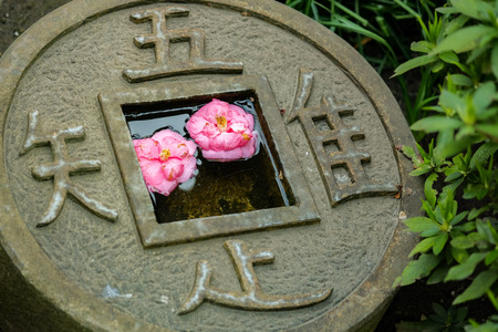 Pink flowers in the round shape coin pool at green garden.