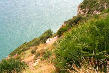 Verde ricca di vegetazione costiera e il mare