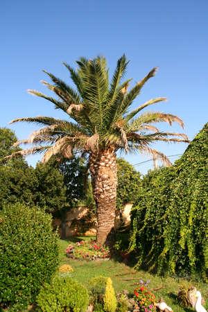 Palm in un giardino ricco di vegetazione verde in Spagna