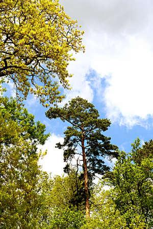 foresta scena rumena con un bel cielo cloudly