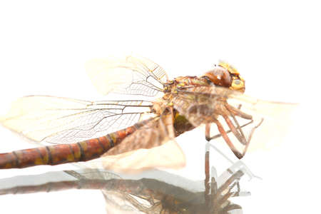 Close-up of a dragonfly on a glass surface with reflection Archivio Fotografico