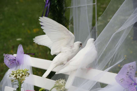 Two white wedding doves on a white bench in a wedding ceremony Stock Photo