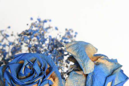 sear: Blue sear roses