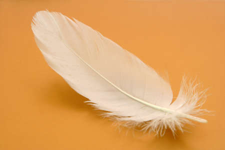 Small feather close-up on a gold