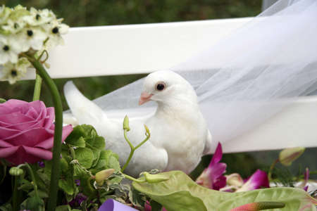 White wedding doves on a white bench in a wedding ceremony