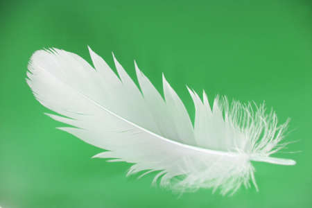 weightless: Small feather close-up on a green