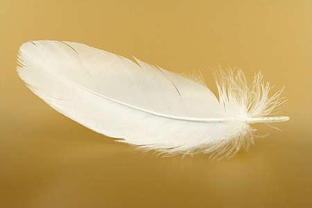 pluma blanca: Pequeño plumas de cerca en un oro Foto de archivo