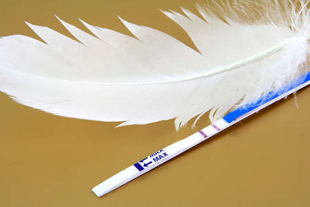 Pregnancy test and a white feather on gold