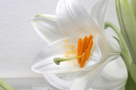 leafs: Ornamental lily flowers bouquet with green leafs