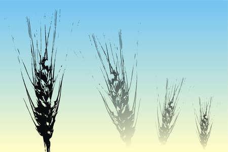 cornfield: Wheat ears illustration on a blue