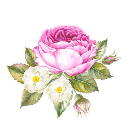 Watercolor illustration of Roses flowers. Bouquet of roses flowers. Vintage watercolor botanical illustration. Red rose isolated on white background.