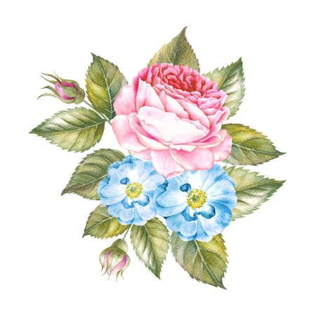 Aquarellillustration von Rosenblumen. Blumenstrauß aus Rosen. Botanische Illustration des Weinleseaquarells. Rotrose getrennt auf weißem Hintergrund. Standard-Bild - 77821305