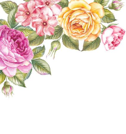 피는 장미 꽃 수채화 그림. 디자인에 대 한 빈티지 스타일에서 귀여운 핑크 장미. 수 제 갈 랜드 조성입니다. 녹색 잎 노란색과 분홍색 꽃은 흰색 배경  스톡 콘텐츠