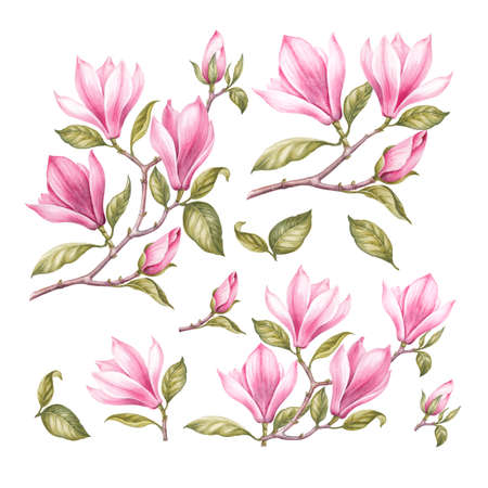 japanese garden: Vintage set of blooming magnolia. Watercolor botanical illustration of a sakura flower. Template for invitation card. Pink flowers with green leaves are isolated over white background.