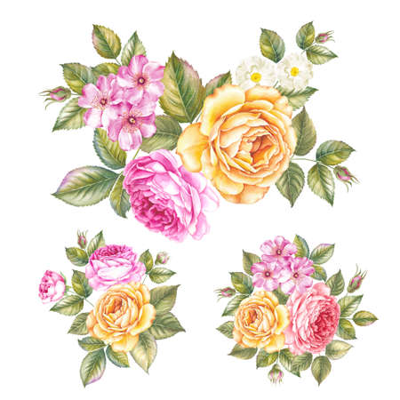 Vintage garland of blooming roses. Watercolor botanical illustration of a rose. Template for invitation card. Rose with green leaves are isolated over white background. Set of blooming rose. Stock Photo