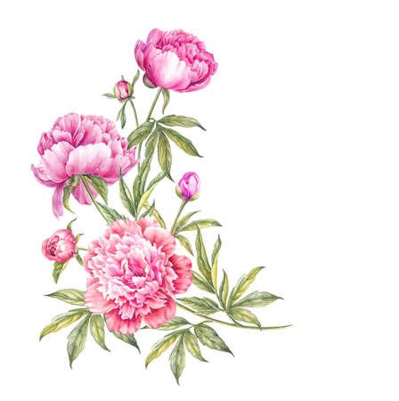수채화 분홍색 모란의 꽃다발입니다. 봄 디자인에 대 한 격리 분홍색 모란의 분기합니다. 스톡 콘텐츠