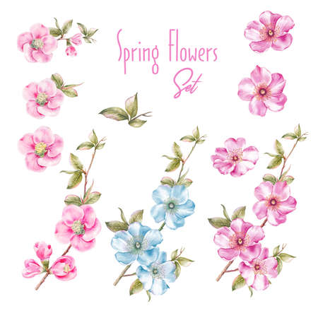 Awesome collection of spring flowers. Watercolor botanical illustration of sakura flower elements. Parts for personal design of congratulations, wedding invitations and cards.