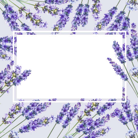 Lavandula aromatic herbal flowers. Bouquet of lavender for your greeting card design. Watercolor illustration isolated over white background. Stock fotó