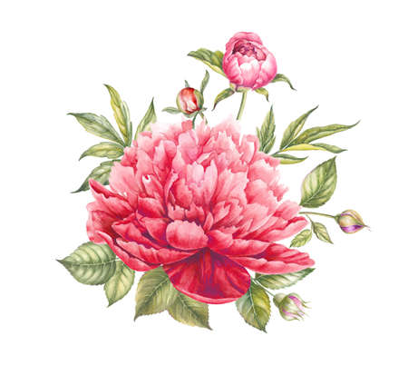 Red peony flower. Watercolor illustration. Botanical design.
