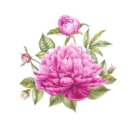 Pink peony flower. Watercolor illustration. Botanical design. Stock Photo