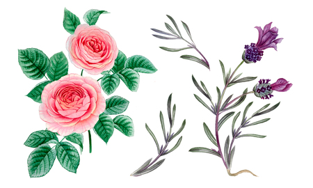 pink and purple flowers. watercolor flowers. Peony branch. Rose branch. leaves isolated. Stock Photo