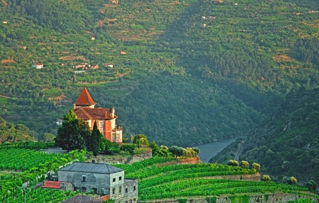 champagne region: Vineyard with house in Portugal