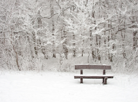 Nice winter scene with bench photo