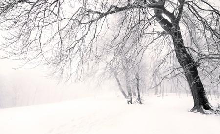 bosque con nieve: Lugar de invierno de Niza Foto de archivo