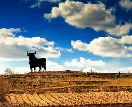 la rioja: Vineyard in Spain with bull  Stock Photo