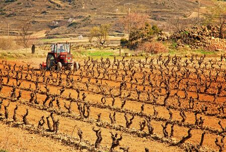 Vineyard in Spain  Stock Photo