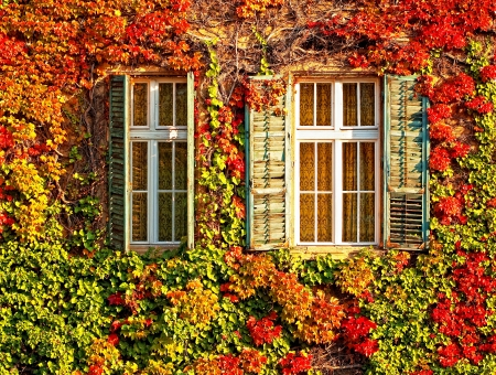 Windows of a house in Budapest at autumn