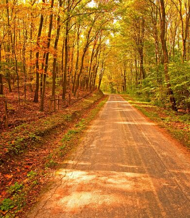 road autumnal: Pathway in the forest at autumn  Stock Photo