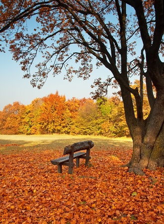 Bench with trees in autumn  photo