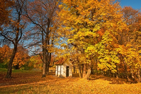 Small white house in the forest in autumn  photo