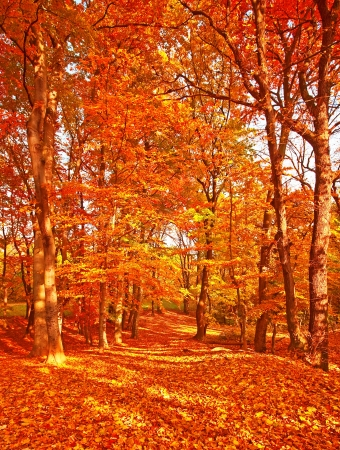 Pathway with nice leaves at autumn Stock Photo
