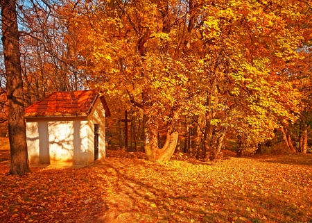 Small chapel in the forest  photo