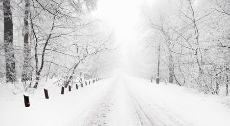 snow road: Forest in winter