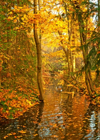River in the forest in autumn photo