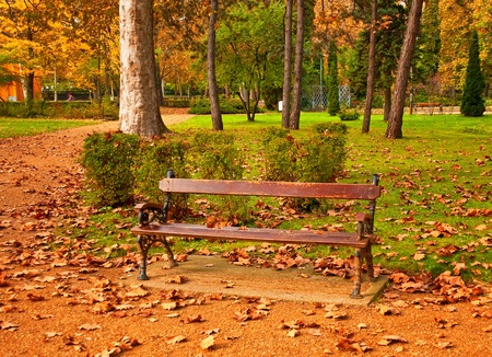 Nice park in autumn in the city  photo